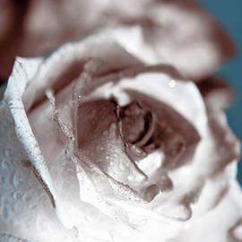 Lali Kacharava - Rose on blue