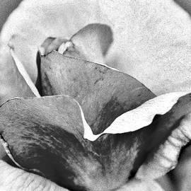Kim Bemis - Rose Petals Like Paper