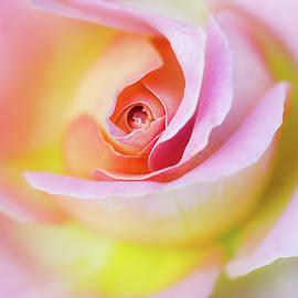 Julie Palencia - Rose Pink Petals and Drops