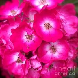 Wonju Hulse - Rose rose together