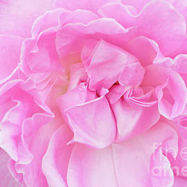 Regina Geoghan - Rose-Sweet Surrender