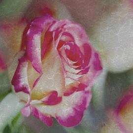Svetlana Iso - Rose vintage