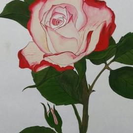 Pushpa Sharma - Rose with bud