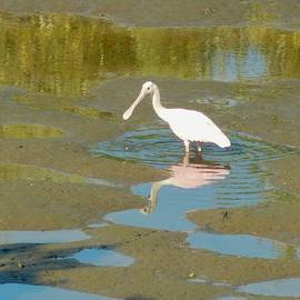 Terry Cobb - Roseate Spoonbill at Low Tide