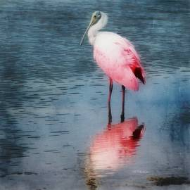 Barbara Chichester - Roseate Spoonbill in Blue