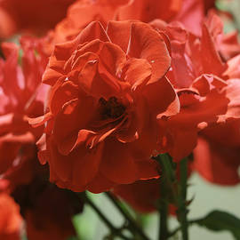 Dimitry Papkov - Roses 2
