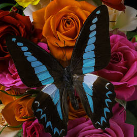 Roses Bouquet With Blue Butterfly - Garry Gay