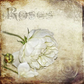 Carolyn Marshall - Roses