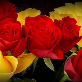 Dianne Pettingell - Roses for You