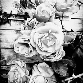 Roses in black and white - Tom Gowanlock