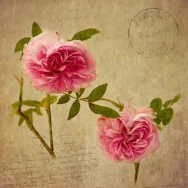 Robert Murray - Roses of Paris