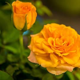 Olga Photography - Roses