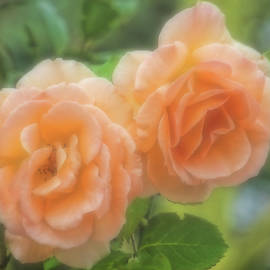 HH Photography of Florida - Roses - Two Of A Kind