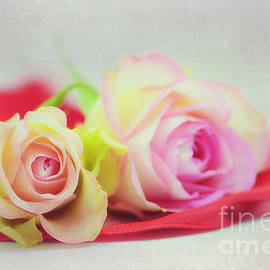 Roses with ribbon - SK Pfphotography