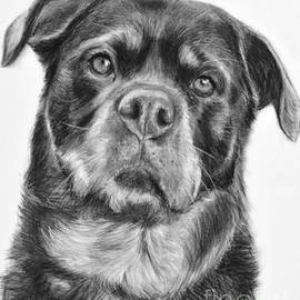Rottweiler Drawing titled Mama