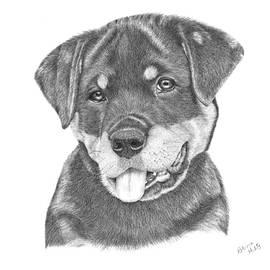 Patricia Hiltz - Rottweiler Puppy- Chloe