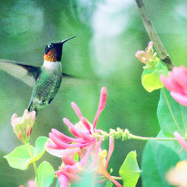 Trina  Ansel - Ruby-Throated Hummingbird