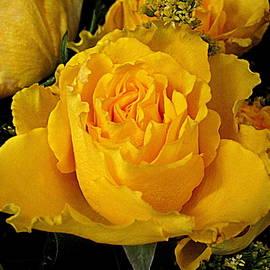 Bonita Brandt - Ruffled Rose