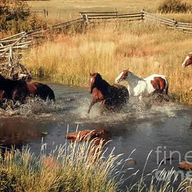 Kathy Franklin - Running Horses