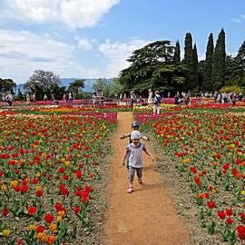 Rick Todaro - Running Through The Tulips