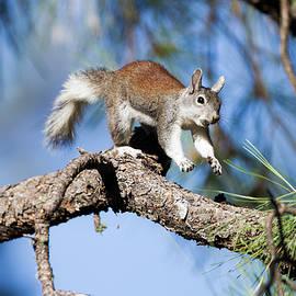 Run,Squirrel run