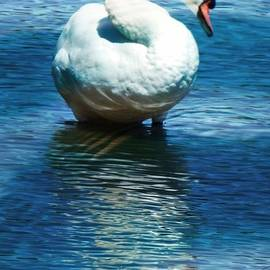 Bobbee Rickard - S is for Swan