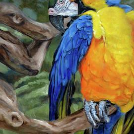 Christopher Reid - Safari Parrot