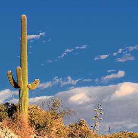 Christine Till - Saguaro cactus - Symbol of the American West