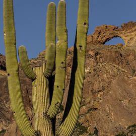 Jean Noren - Saguaro Cactus Near Arch