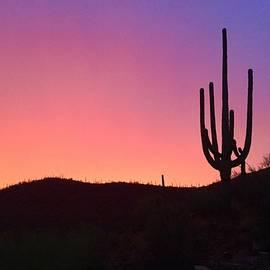 Eric Rosales - Saguaro Sunset