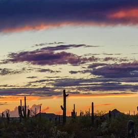 Saija Lehtonen - Saguaro Sunset Sonoran Style