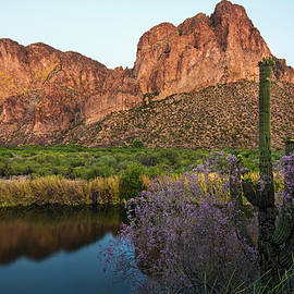Dave Dilli - Salt River reflections with Ironwood blooms