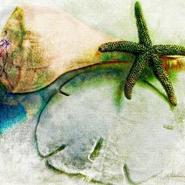 Barbara Chichester - Sand Dollar Star Shell