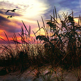 Joann Vitali - Sand Dunes at Sunset - Cape Cod