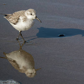 Bruce Frye - Sanderling- Reflection and Shadow