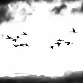 Britt Runyon - Sandhill Cranes #00