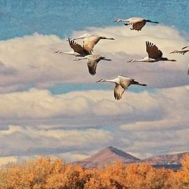 Flying Z Photography By Zayne Diamond - Sandhill Cranes over Bosque del Apache Wildlife Refuge, New Mexico