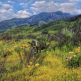 Lynn Bauer - Santa Monica Mountains in Spring