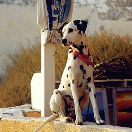 Melinda Seyler - Santorini dalmatian