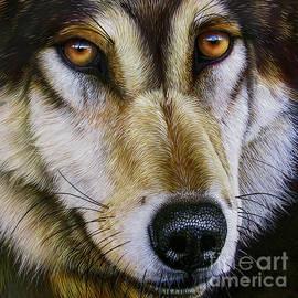 Jurek Zamoyski - Save the Wolf