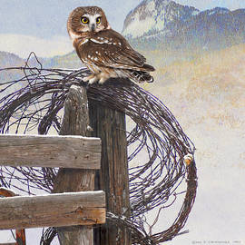 R christopher Vest - Saw-whet Owl On Post