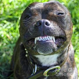 Say Cheese by Kaye Menner
