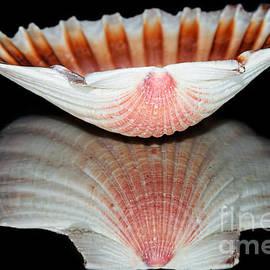 Kaye Menner - Scallop Shell Reflection by Kaye Menner