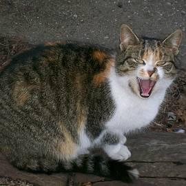 Sara  Raber - Scary Kitty