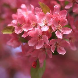 Rachel Cohen - Scrumptious in Pink
