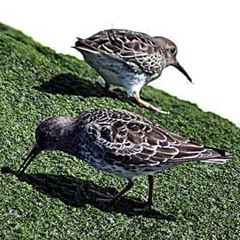 John Hughes - Sea Birds