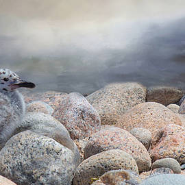 Robin-lee Vieira - Sea Eagle