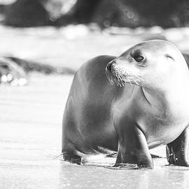 Ruth Jolly - Sea Lion baby