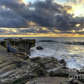 Eddie Yerkish - Sea Lions At Sunset