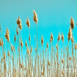 Colleen Kammerer - Sea Oats on Turquoise Sky